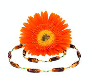 dekoraci kwiatu kobieta Obraz Stock