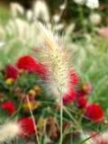 dekoraci kwiatu trawa Zdjęcie Stock