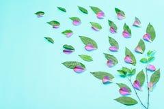 Dekoracj menchii kwiatu płatków tło Zdjęcia Royalty Free