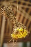 Dekoracja, bukiet, wiązka mały kolor żółty kwitnie wiszący do góry nogami na sznurku Drewniany backgroung Zdjęcie Royalty Free