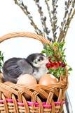 dekoracja Easter Obrazy Stock