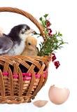 dekoracja Easter obraz stock
