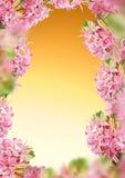 Dekoracja hiacyntu rama Fotografia Stock