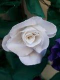 dekoracja kwiaty tapetują tomar Fotografia Royalty Free