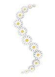 dekoracja kwitnie biel Fotografia Stock