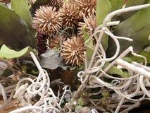Dekoracja robić susi kwiaty obraz stock