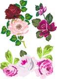 dekoracja rose występować samodzielnie Zdjęcia Royalty Free