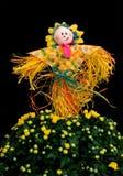 Dekoracja strach na wróble z mum kwiatem Zdjęcia Royalty Free