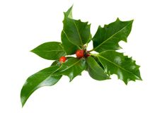 dekoracji świątecznej holly ostrokrzew Obraz Royalty Free