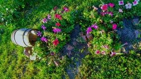 Dekoracyjna baryłka z kwiatami obraz stock