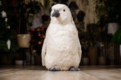 Dekoracyjna boże narodzenie zabawka w postaci białego pingwinu Obrazy Royalty Free