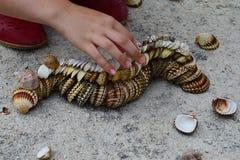 Dekoracyjna gąsienica robić bivalve milczka seashells na beton plaży molu, małej dziewczyny ręki sumujący finał łuska obraz royalty free