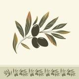 Dekoracyjna gałązka oliwna. Dla etykietki, paczka. ilustracji