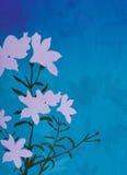 dekoracyjna ilustracja kwiecista tło Fotografia Royalty Free