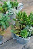 Dekoracyjna kotłowa mieszanki rozmaitość sukulent Kwitnie w garnek roślinach w ogródzie deskowy nieociosany drewniany fotografia royalty free