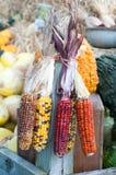 Dekoracyjna kukurudza na jesień rynku Zdjęcia Royalty Free