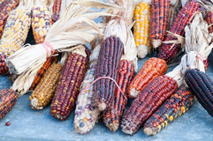 Dekoracyjna kukurudza na jesień rynku Zdjęcie Royalty Free