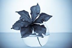 dekoracyjna kwiatów szkła waza Obraz Stock