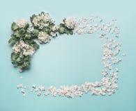 Dekoracyjna kwiecista rama robić biali kwiaty, płatki i okwitnięcie, na pastelowym błękitnym tle Obrazy Royalty Free
