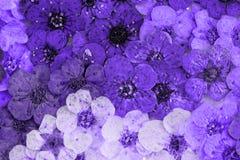 Dekoracyjna montaż kompilacja kolorowa wysuszona wiosna kwitnie Obraz Royalty Free