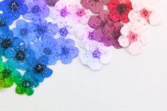 Dekoracyjna montaż kompilacja kolorowa wysuszona wiosna kwitnie Zdjęcie Stock