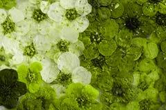 Dekoracyjna montaż kompilacja kolorowa wysuszona wiosna kwitnie Fotografia Royalty Free