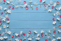Dekoracyjna rama biali wiśnia kwiaty i czerwoni płatki Obrazy Stock