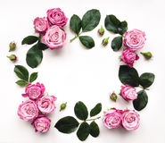 Dekoracyjna rama z różami i liśćmi na białym tle Obraz Stock