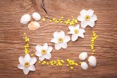 Dekoracyjna rama z seashells Zdjęcia Stock