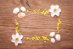 Dekoracyjna rama z seashells Zdjęcia Royalty Free
