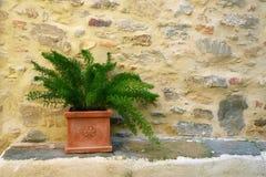 Dekoracyjna roślina na kamiennej ścianie Fotografia Royalty Free