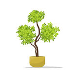 Dekoracyjna roślina na garnek ilustraci Zdjęcia Stock