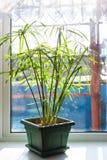 Dekoracyjna roślina w zielonym garnku Obraz Royalty Free