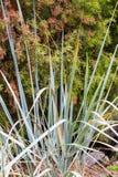 Dekoracyjna turzyca na naturalnym zieleni i br?zu tle Ornamentacyjna trawa w ogr?dzie zdjęcie stock