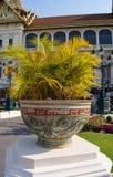 Dekoracyjna waza z roślinami Zdjęcie Stock