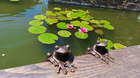 Dekoracyjne żaby i Lotus przy fontanną Obraz Stock