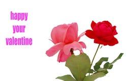 dekoracyjne róże Zdjęcia Royalty Free