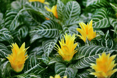 Dekoracyjne rośliny Zdjęcia Stock