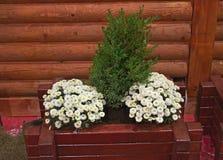 Dekoracyjne rośliny w drewnianym flowerbed Zdjęcia Stock