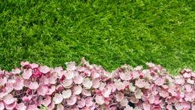 Dekoracyjnego tła sztuczna menchia kwitnie na trawy ścianie Fotografia Royalty Free