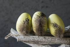 Dekoracyjni żółci Wielkanocni jajka z piórkami na gałązce, przeciw popielatemu tłu fotografia royalty free