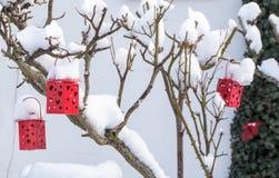 Dekoracyjni czerwoni lampiony z sercami na śnieg zakrywającym różanym krzaku w zimie obraz stock