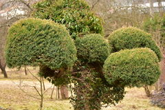 dekoracyjni drzewa Zdjęcie Stock