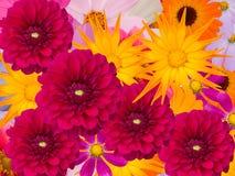 dekoracyjni kwiaty Obrazy Royalty Free