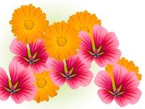 dekoracyjni kwiaty Obraz Royalty Free