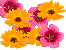 dekoracyjni kwiaty Zdjęcie Royalty Free