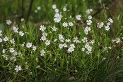 dekoracyjni kwiaty Zdjęcia Royalty Free