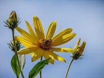 dekoracyjni kwiaty Fotografia Stock