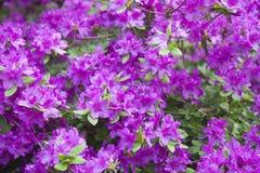 dekoracyjni kwiaty karlovy zmienia cesky krumlov republiki czech miasta średniowieczny stary widok Zdjęcia Stock