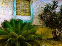 Dekoracyjni kwiaty obok antycznej dom ściany Zdjęcia Stock